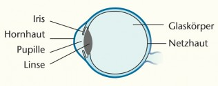 Illustration Aufbau des Auges